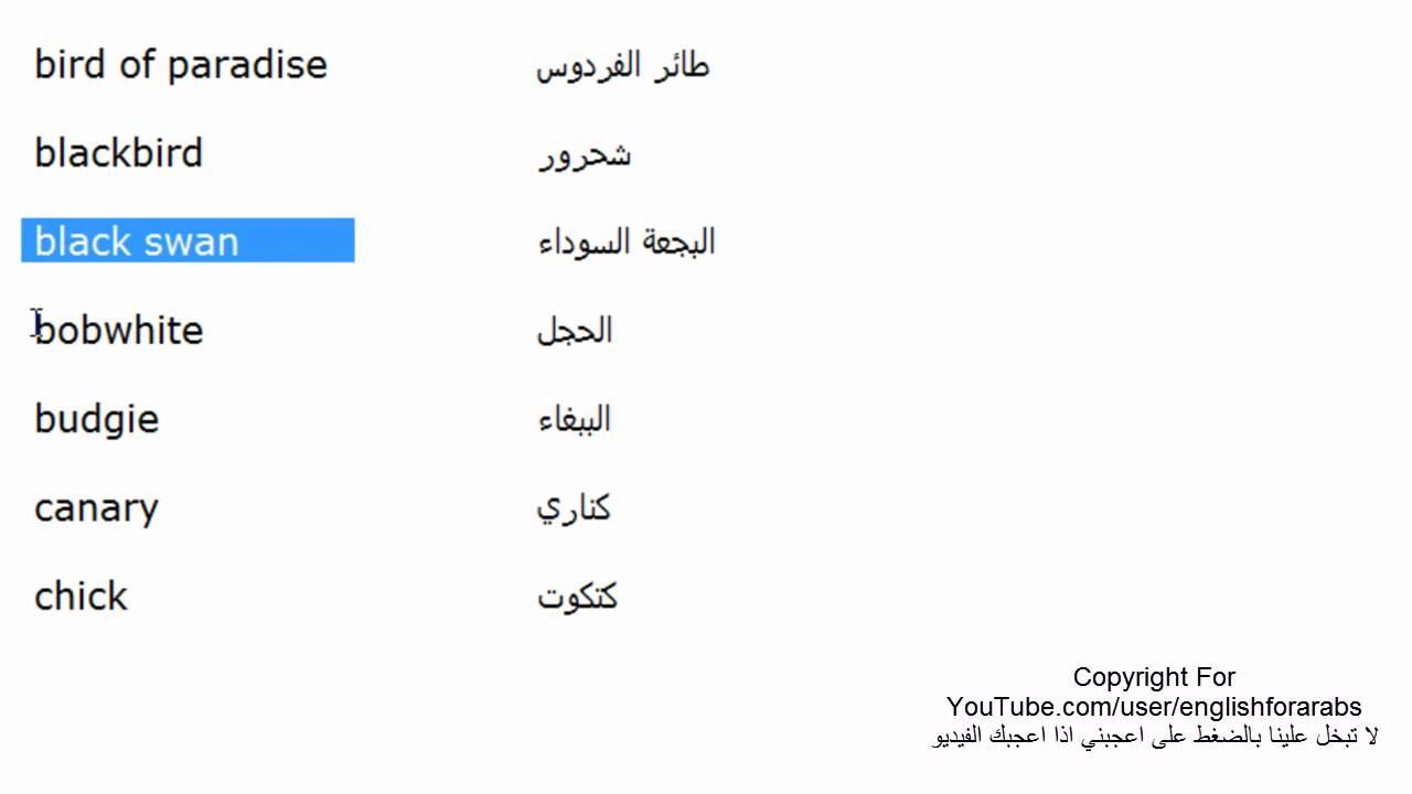 اسماء الطيور باللغة الانجليزية الجزء 1 متحدث انجليزي Youtube