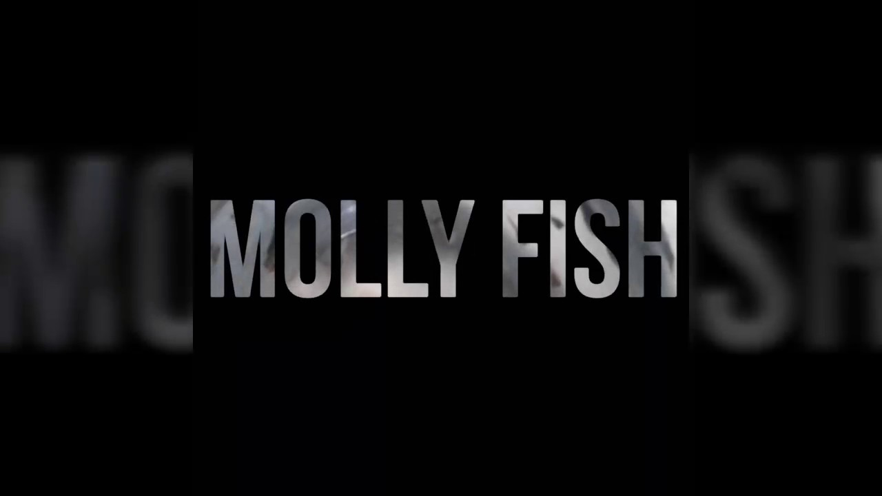How to take care of baby molly fish part 2 hindi english for How to take care of a fish