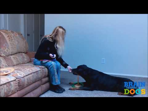 How to train a dog, how to train a puppy - how to house train a dog - how to potty train a dog