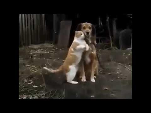 Смешное Видео!Гифки!New funny videos! 63