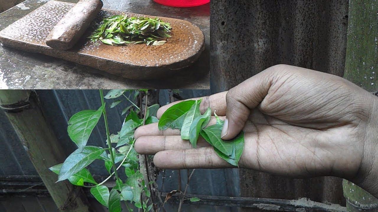 traditional mehndi henna leaves