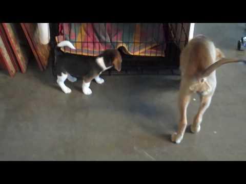 Dax's Puppy Headstart Class