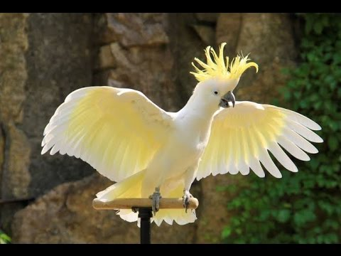 Image result for cockatoo yellow