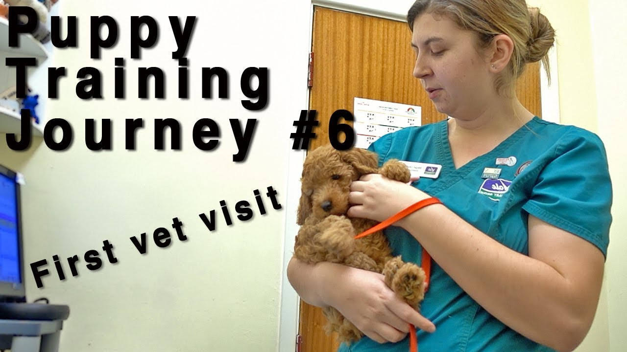 Puppy Training Journey #6. First vet visit with a puppy
