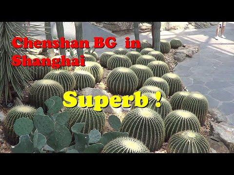 The Plant Traveller: Chenshan Garden Shanghai