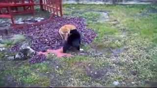 Кошачьи бои без правил