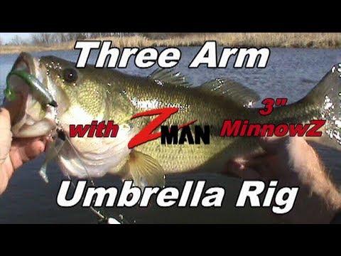 Monster Bass On Three Arm Umbrella Rig With Z-Man Three Inch MinnowZ