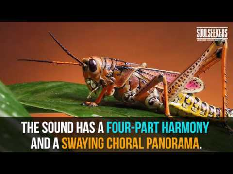Have you ever heard crickets chirping slowed down? Its amazing!