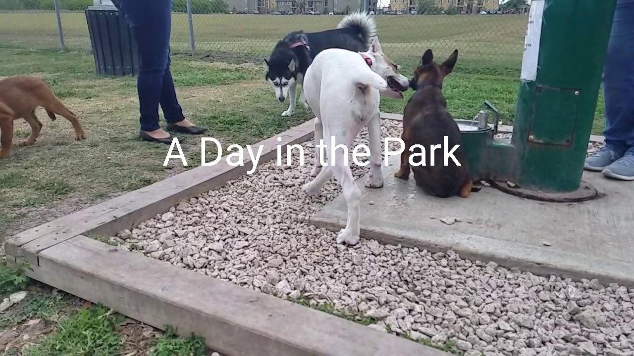 Dog Adoption Brownsville Tx