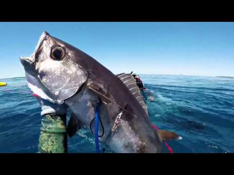 Real Tonga Spearfishing Adventure 1080 HD