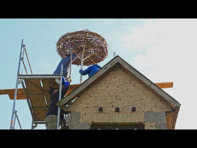 Weißstorch-Horst - Von der Idee über den Plan zur Umsetzung