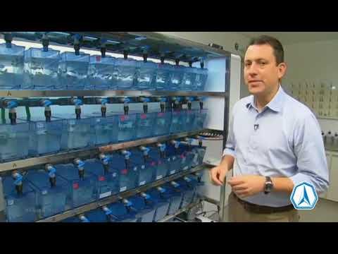 Peixe é capaz de detectar problemas na qualidade da água