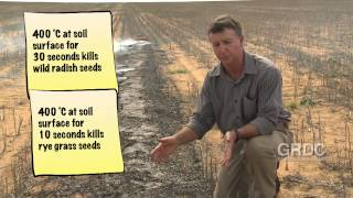 IWM: Weed Seed Bank Destruction - Narrow Windrow Burning