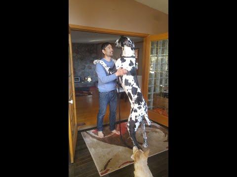 LIVE Broadcast Dangerous Dog Training Group Session
