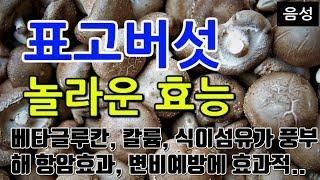 [#표고버섯효과] 표고버섯의 놀라운 효능 10가지 (베…