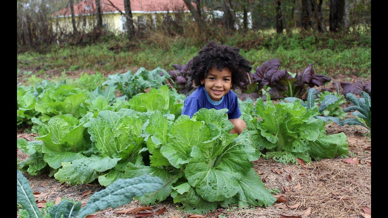 Spring 2013 Garden Prep Carrots Potatoes Green Beans Youtube