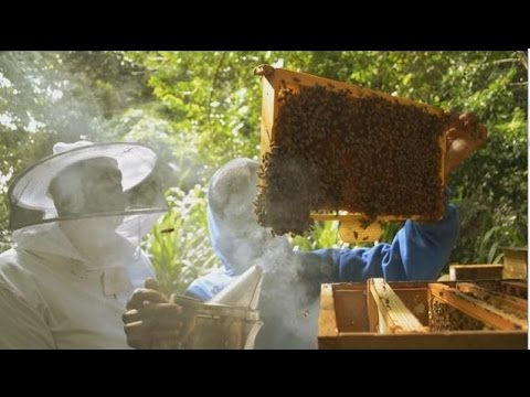 G Links Grenada Honey Edu Documentary