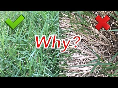 hqdefault - How Do I Get My Bermuda Grass To Thicken Up
