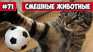 Смешные животные - веселые котята | Bazuzu Video ТОП подборка ноябрь 2017