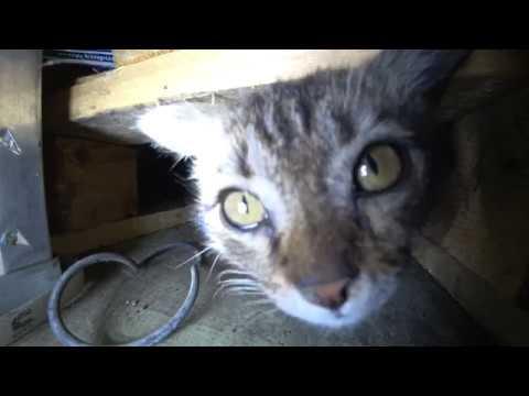 Как выманить кота из укрытия