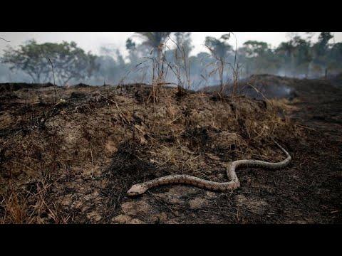 Лесные пожары 'сжирают'