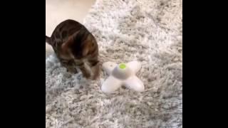 Живая бабочка для кота