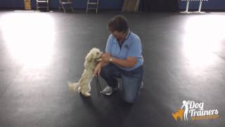 Quigley's First Week Of Boarding School At Dog Trainers Workshop
