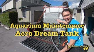 Aquarium Maintenance: Acro Dream Tank --- Gallery Aquatica TV