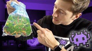 Garnelen im UFO Aquarium!