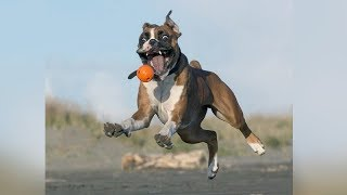 SUPER HILARIOUS cats and dogs. - TRY to HOLD your LAUGH!