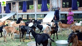 How To Start A Business - Goat Farming Business Ideas With Low Investment And High Profit