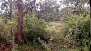 Buy 1 Acre Agricultural Land with Mango trees in Kunigal Taluk close to Maddur