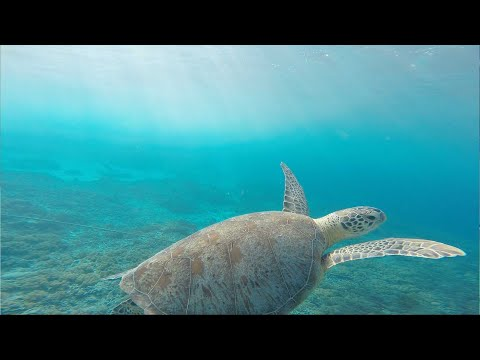 Things to do in Cayman: The Cayman Turtle Centre