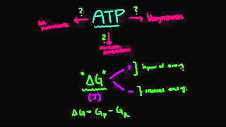 06   Overview of metabolism   03   ATP hydrolysis  Gibbs free energy