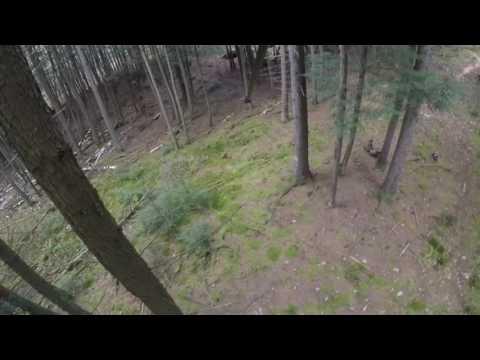 wisconsin-white-tail-deer-hunting/-rut