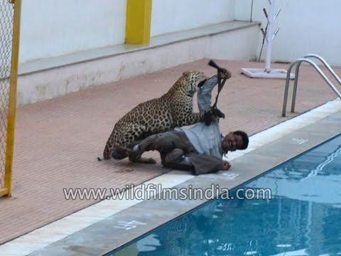 Leopard Attacks many at Bangalore school campus