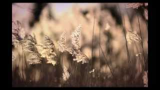 Autumn Walks Piano Composition [NEW] - Joe Curtis