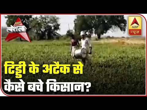 Amid Lockdown, Farmers Tackle The Locust Crisis Too | ABP Special | ABP News