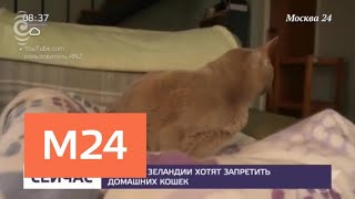 В Новой Зеландии предложили запретить домашних кошек - Москва 24