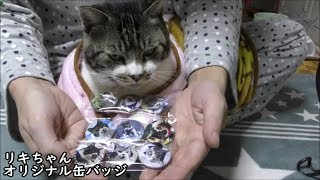 リキちゃんの缶バッジを販売してます☆オリジナルグッズ☆猫グッズ【リキちゃんねる 猫動画】Cat video キジトラ猫との暮らし thumbnail