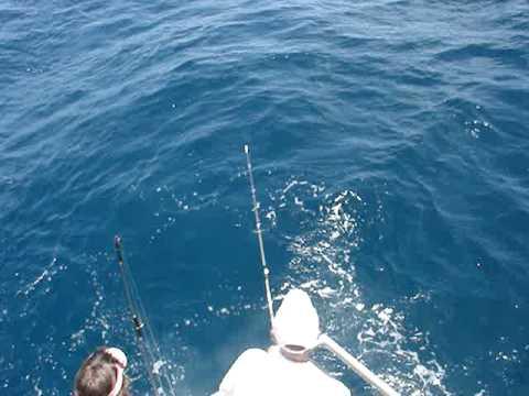 Lady stuart deep sea fishing cobia youtube for Lady stuart deep sea fishing
