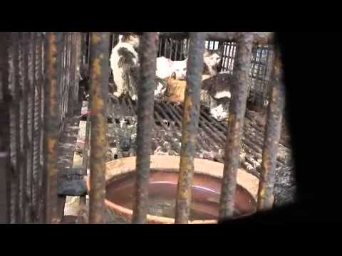SanHua (2011)_An Ai Weiwei film_ revealing the Chinese Cruel Cat meat industry Chain