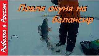 Ловля окуня зимой на балансир Клёв как из пулемёта