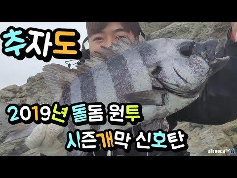 추자도 돌돔 원투 낚시 시즌 개만 신호탄 rock bream/石鯛/鸚鵡/Fishing
