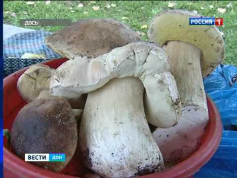 Еще один ребенок скончался от отравления грибами в ростовской больнице