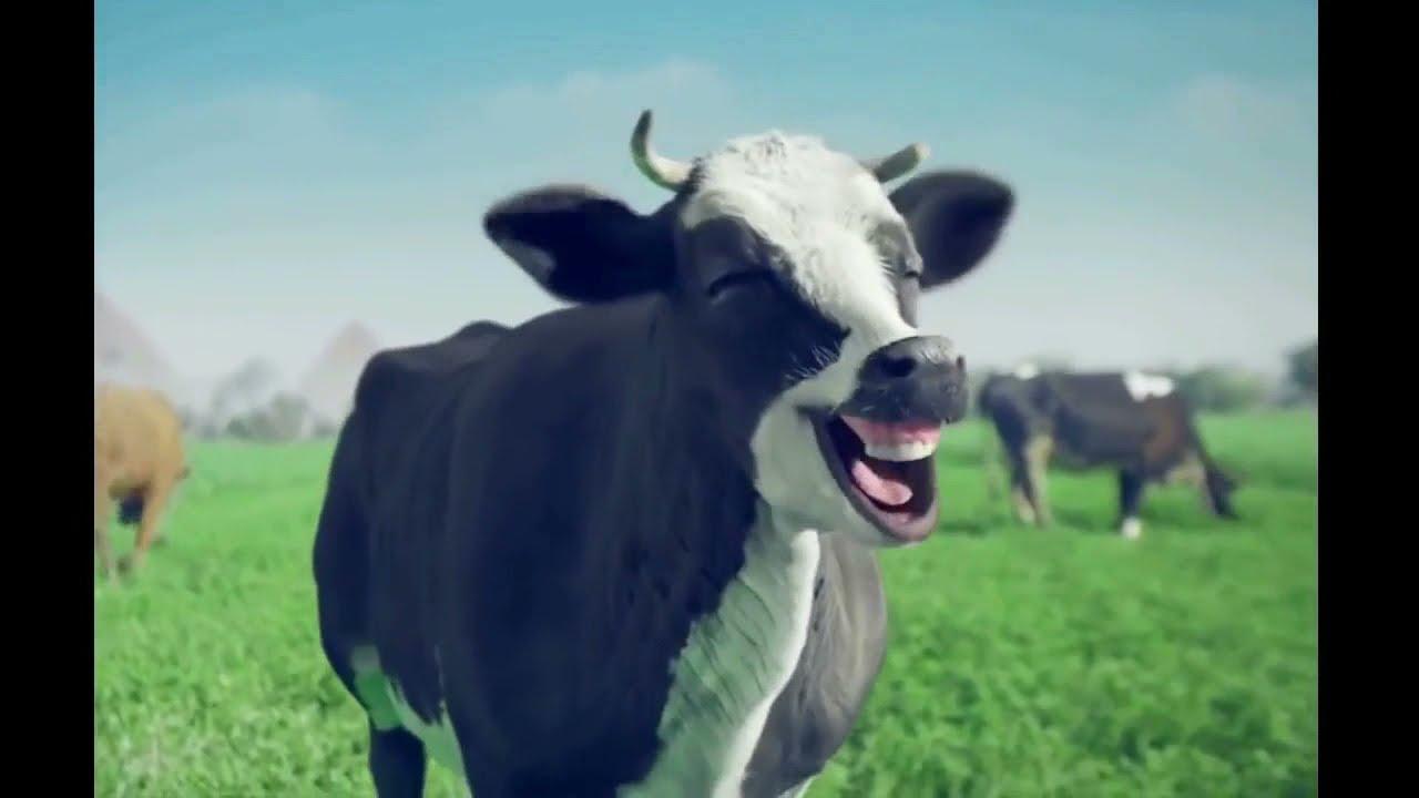 JERUSALEMA CHALLENGE BY ANIMAL FARM - REMIX (Jerusalema - Master KG Ft. Nomcebo)
