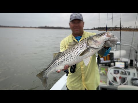 Lake Texoma FALL STRIPER FISHING! A Very First For Me, Went VERY WELL!! (Guided Trip)