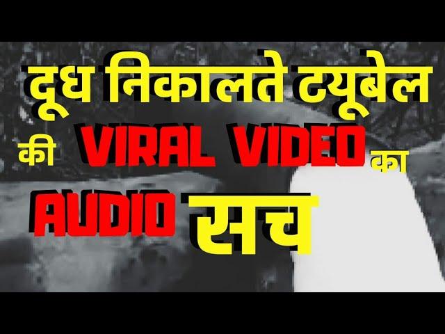 दूध निकालते टयूबैल की Viral Video का सच