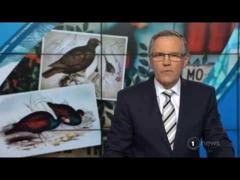 Auckland Zoo helps last ditch bid to save Samoa's national bird