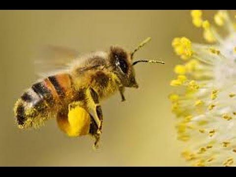 Pollination in Plants 01 Urdu Hindi